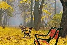 The Autumn Leaves begin to fall .....