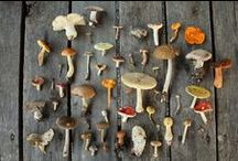 Mushrooms And Beautiful Fungi / by Greenspirit