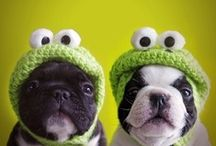 Pug Love! / Pugs!