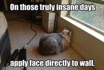 Funny Cat Pics / by Corey Burrington