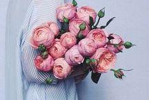 F l o r a l   L o v e / My love of flowers... / by Diana Krasnyuk