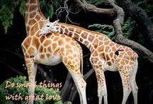 San Fransico ZOO / LOVE THE ZOO! All photo by me...Lisa Unruh!!!  The Photo Lady!  / by Lisa Unruh