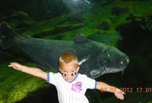 Aquariums / Aquariums at the National Mississippi River Museum & Aquarium.