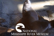 River Life @ the Museum & Aquarium / These are the fishes, critters and creatures that you visit at the National Mississippi River Museum & Aquarium.