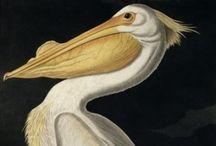 Americana Fauna / by Valezka Saravanja Pennington