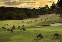 Australia/New Zealand-Ohhh, yesss! / by Valezka Saravanja Pennington