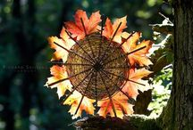 Celebrate // Autumn Equinox & Festivals / by Rebecca Zarazan Dunn