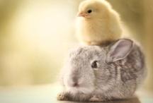 állatságok - funny animals -