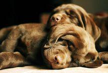 Animais - Puppies