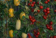 Gardening / by Amy Buffetta