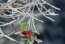 {a winter's tale} / by Deborah Ondrejko