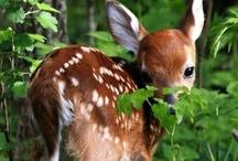 {doe - a deer} / by Deborah Ondrejko