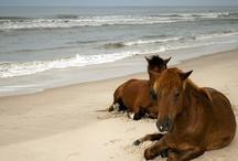 {all the pretty horses} / by Deborah Ondrejko