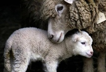 {have you any wool}