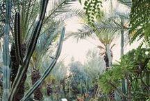 Jardins / Nature domestiquée