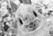 Too Cute for Words... / Cute little things, animals, puppies, bunnies and babies!