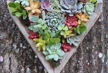 Love... Small Garden / Ideas for small gardens, everything from propagating plats from cuttings, to small building projects and landscape design inspiration.  City gardens to country farms.