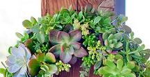 Gardening / I have a green thumb and gardening is a favorite pass time.