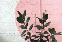HUNNI'S // Evergreen / Everything green & gardens