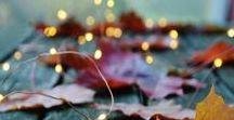 Fall / Fall is my favorite season. Come take a look!