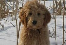 Animals  / The cute and cuddly side if the most adorable animals on Pinterest!!  / by Carly Ganter