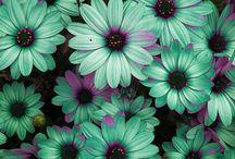 Exterior   Garden / Garden plants and design / by Jessica Bryant
