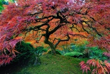 Botanical Gardens in the USA / Major botanical gardens and arboretums in the United States of America