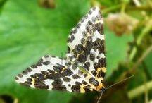 Butterflies & Caterpillars, Moths / #Butterflies & #Caterpillars and #Moths / by My Lap Shop Publishers