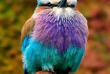 ...BIRDS . / by Tony Pellinghelli