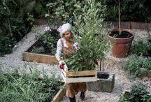 garden / Inspiration for veggie and cutting gardens.