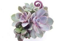 succulent art / by Sandy Yorks