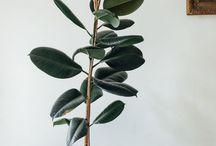 indoor plants / Tips for growing indoor plants and display ideas