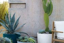 outdoor living / Palm Springs inspired outdoor space.  Succulents, cacti and drought-tolerant plants.