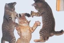 Cat Party / I cant stop posting cat photos! / by Leda Zawacki