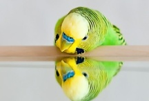 Birdies / by Brooke Claussen