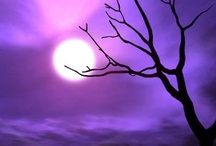 Purple Plum / by Brooke Claussen