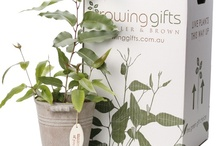 {plant packaging}