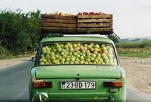 i love apples! / a compilation of everything having to do with apples