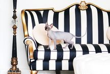 Tres Chic! /  French Provincial , Hollywood Regency type decor that I just love. It's all Trés Chic. / by Chantel Gia