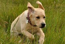 Doggy Sidekick / by Sienna Searle