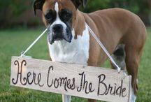 Wedding / by Sienna Searle