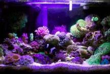 Fluval Edge inspiration! / Some inspiration for our customers showing the kind of Aquascaping that is possible with these amazing little aquariums!