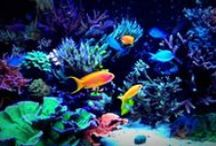 Red Sea Aquariums Videos / Some inspirational videos showing what is possible with the Red Sea range of aquariums. All available with 0% finance options at Complete Aquatics
