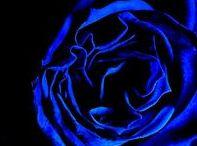 Blue blue electric blue