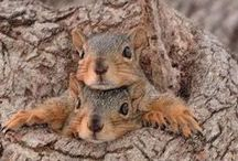 Animals*Chipmunks, Raccoons & Squirrels / by Cathy Kent