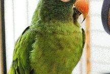 Pet Parrots / The beauty of parrots!