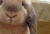 Bunnies / Giant or dwarf, long fur or short fur, lop ears or upright, rabbits are best friends to many pet parents. Bunnies are extremely social and one of the most playful companions.