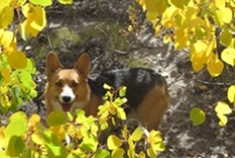 Corgi's and Friends / Asst. Animal Pics / by Dorothy Dessauer