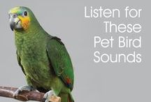 Pet Bird Helpful Tips