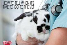 Small Animal Helpful Tips